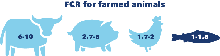 Protein production facts - feed conversion ratio for fish and other protein sources